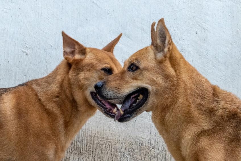 保護遺棄動物協會 (SAA)-4-婚禮當日