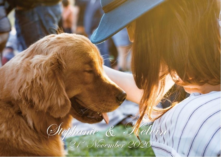 保護遺棄動物協會 (SAA)-2-婚禮當日