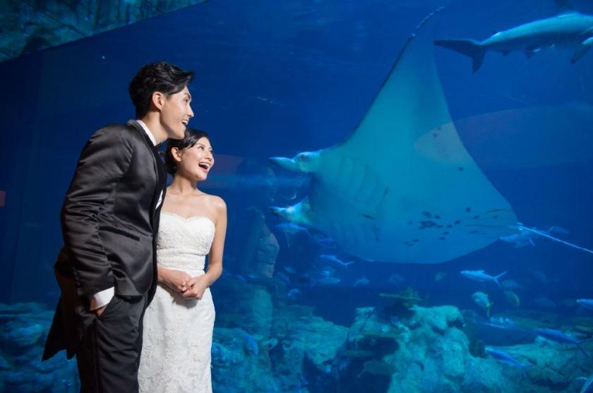 香港海洋公園 Hong Kong Ocean Park-0-婚宴場地